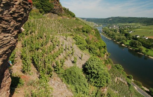 The Mosel - It's Steep!