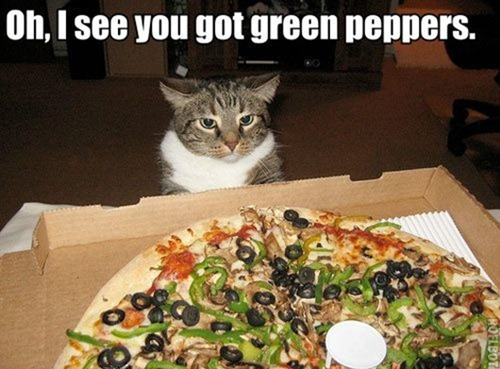 funny-pics-cat-pizza