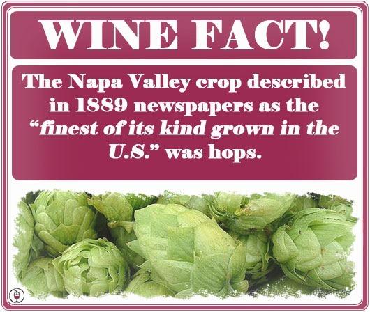 WINE-FACT-hops